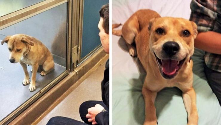 собака из приюта: до и после
